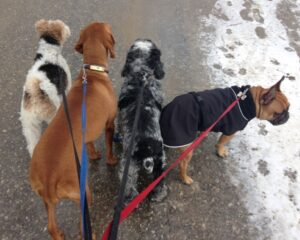 CDW – Winter Walk 4